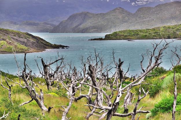 Мертвый лес в национальном парке торрес-дель-пайне, патагония, чили