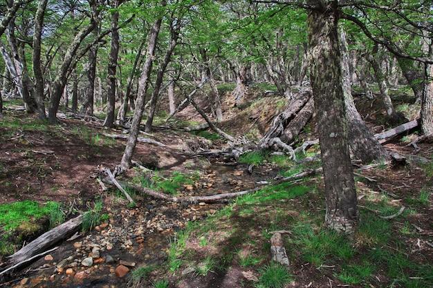 Лес в лос-глейшер, национальный парк рядом фитц рой, эль чальтен, патагония, аргентина