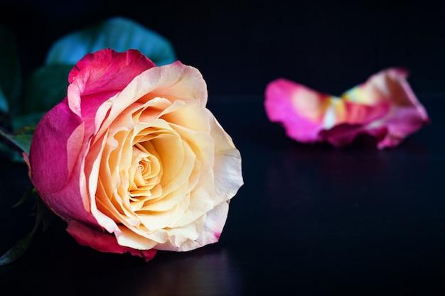 Розовая роза на черном фоне