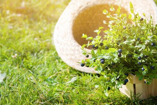 夏の日の夏の帽子のブルーベリー