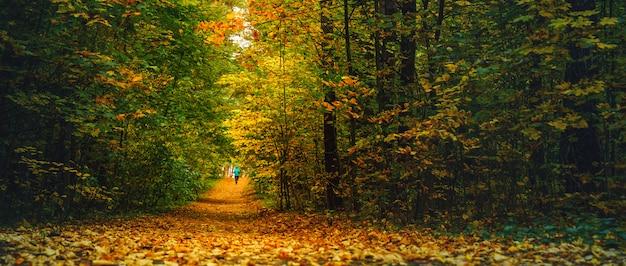 秋の森を走る女性アスリート。落ち葉が散らばる素晴らしい秋の森でジョギング