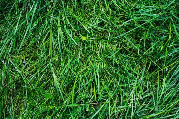 緑の草のテクスチャです。自然の背景