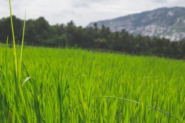 バックグラウンドで山々と緑の畑で芝生を閉じます