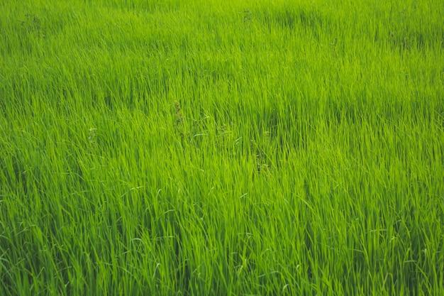 緑色の芝生のオープンフィールド