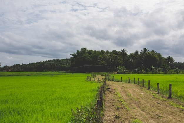 緑の畑を通る通路