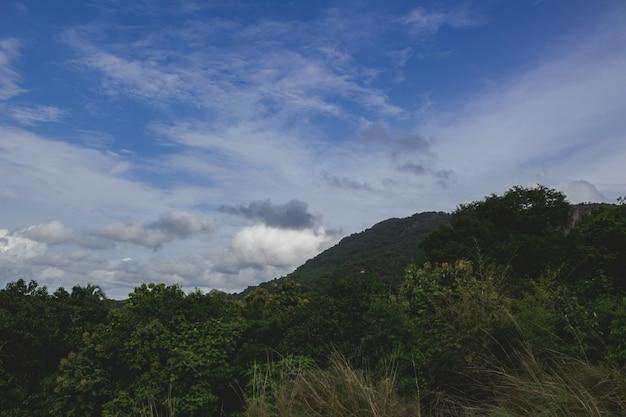 背景に大きな丘がある木々