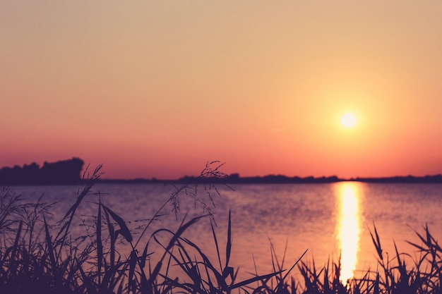 バックグラウンドで湖の上に日没の芝生を閉じます