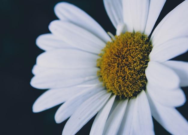 白い花を閉じます