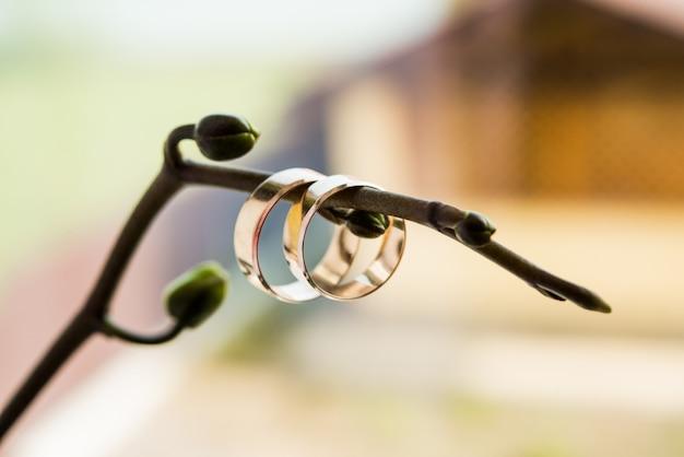 Обручальные кольца на ветке