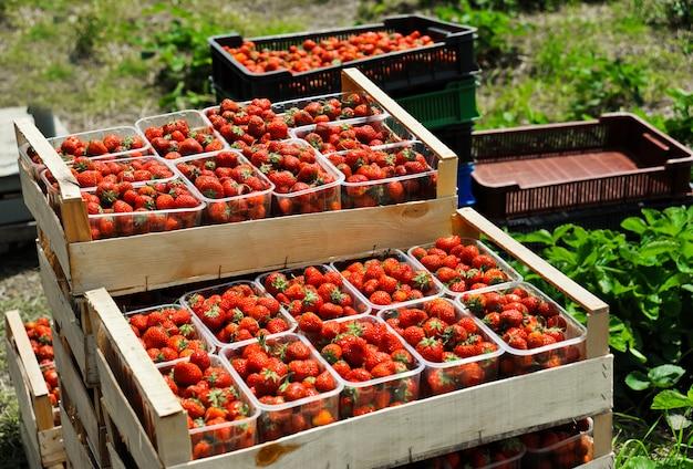 プラスチックの箱に熟したイチゴ