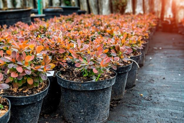 ガーデンショップ。植物の列