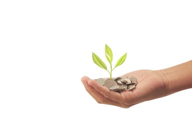 手にコインから成長しているお金の植物