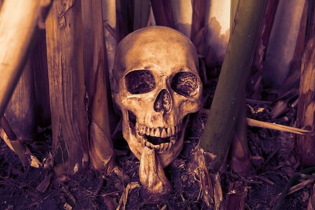 頭蓋骨の静物
