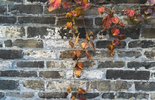 Старая стена и листья, архитектура хуэйчжоу, китай