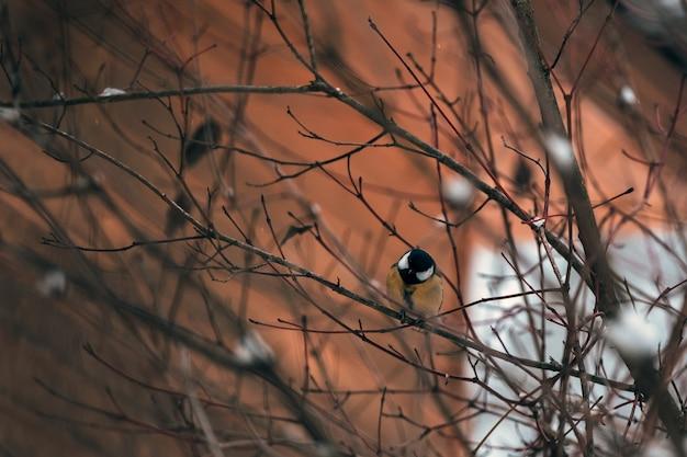 Красочная большая синица садилась на насест на стволе дерева.