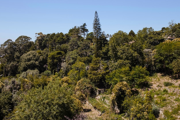 木々と青空の風景