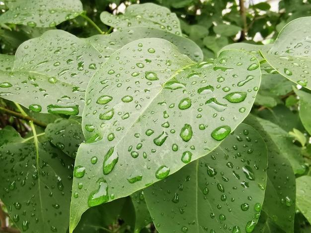 雨の後の水滴と明るい緑の葉のクローズアップ