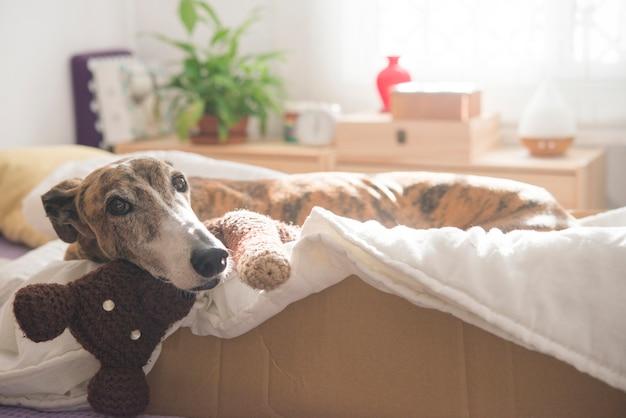 Собака в спальне отдыхает