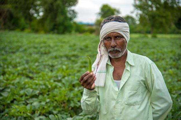 オクラの植物またはてんとう虫の農場で働くインドの農家。