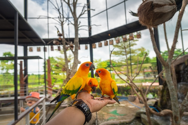 黄色いオウム鳥、コガネメキシコインコ。