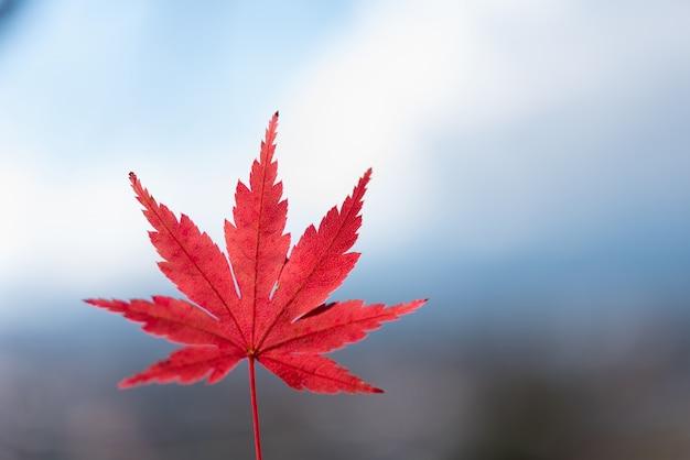 カラフルな秋の葉の季節