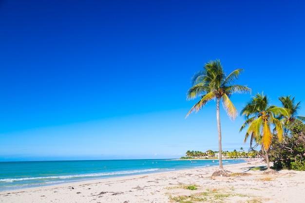 ヤシの木とキューバの熱帯のビーチ