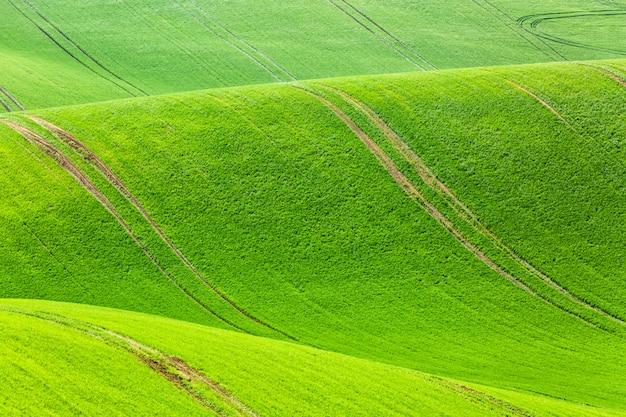 農村の春農業テクスチャ背景