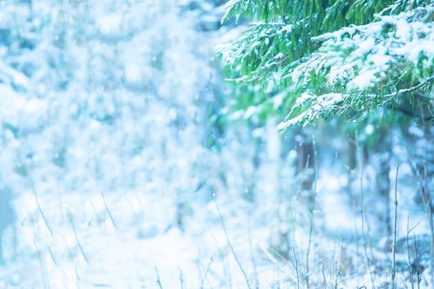 雪に覆われた木々の美しい冬の風景。