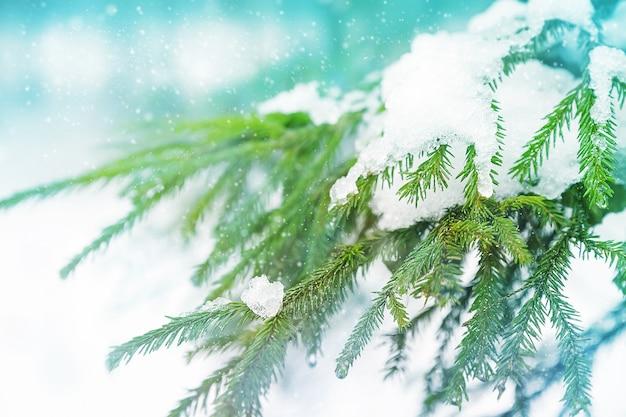 冬の森の雪とスプルースの枝。画像を閉じる