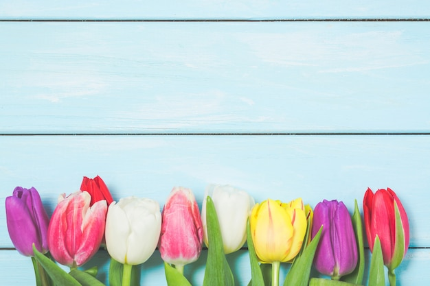 Яркие весенние тюльпаны на голубом деревянном фоне