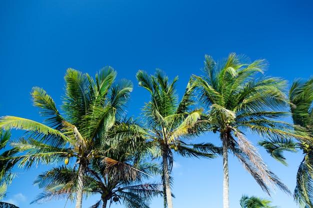 晴れた青空にヤシの木。