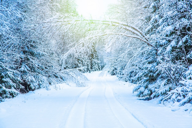 Зимний сезонный пейзаж. дорога в зимнем лесу с заснеженными деревьями с солнечным светом