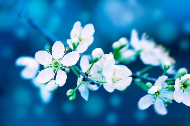 春の自然の美しい芸術的な幻想的なトーンの花のイメージ。