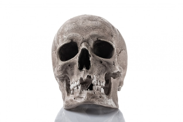 白で隔離される人間の頭蓋骨