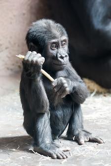 Милый маленький горилла играет с палкой