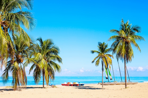 夏の日にキューバのバラデロの熱帯のビーチにはヨットとヤシの木があります。