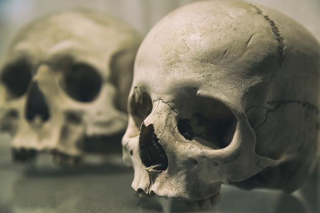 古い人間の頭蓋骨をクローズアップ