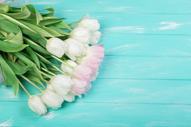 Розовые и белые очень нежные тюльпаны на зеленом синем деревянном фоне
