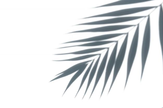 Тропический пальмовый лист на белом фоне