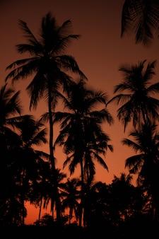 Экзотический оранжевый закат пальмовый силуэт пейзаж. пляж шри-ланки