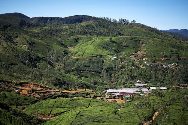 Прекрасный вид на горную чайную плантацию и фабрику