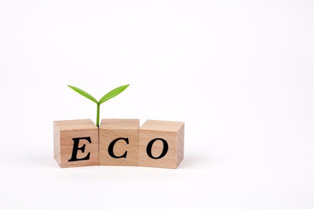 木製キューブで書かれたエコ単語を芽します。