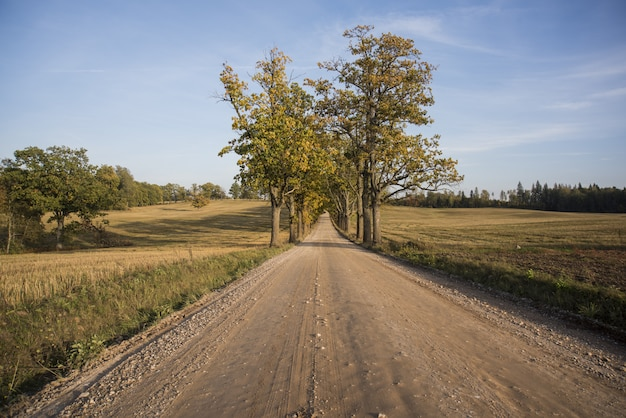 Осенняя панорама. пейзажный вид.