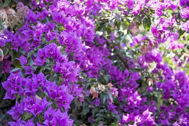 夏の晴れた日に小さな紫色の花。