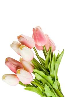 ピンクの春の花チューリップ