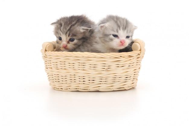 孤立した子猫のバスケット