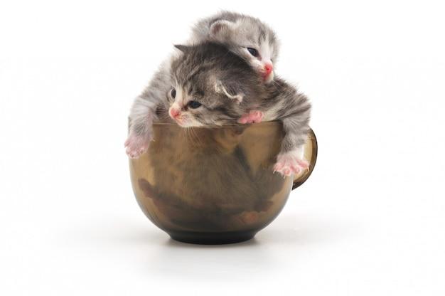 分離されたカップの子猫