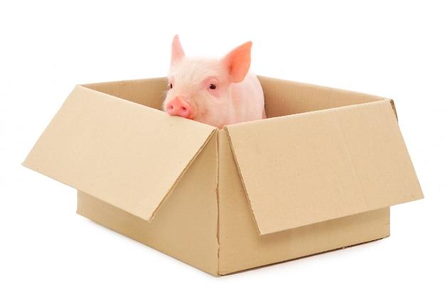 白い背景で隔離のボックスで豚します。