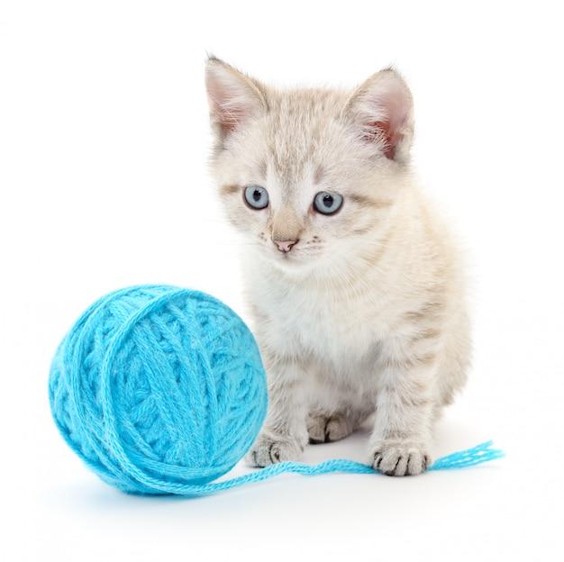 毛糸の玉を持つ猫