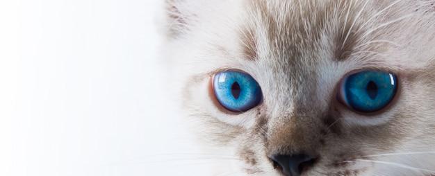 孤独な白い背景の愛らしい猫